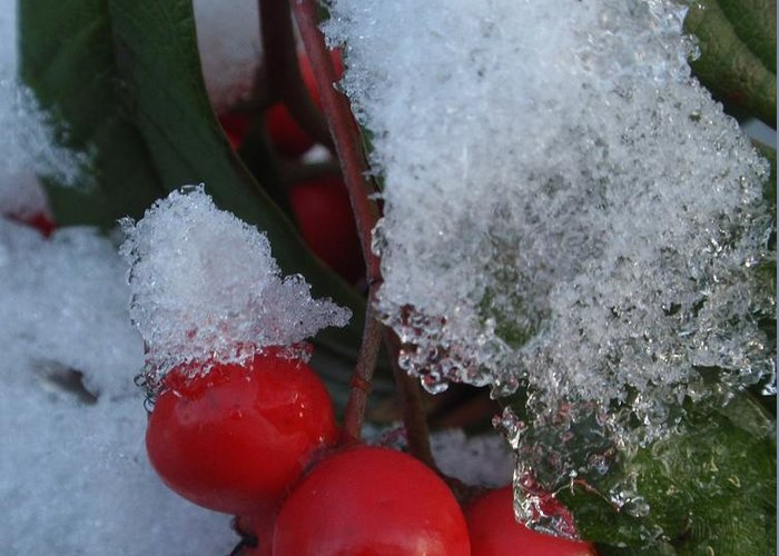 Greeting Card featuring the photograph Ice Berries by Valia Bradshaw