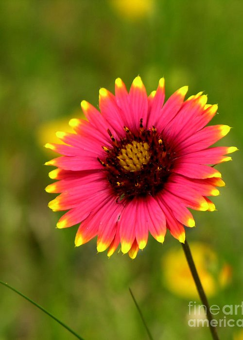 Floral Greeting Card featuring the photograph Indian Blanket by Paul Anderson