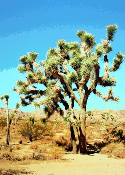 Joshua Trees Greeting Card featuring the photograph Joshua Trees by William Dey