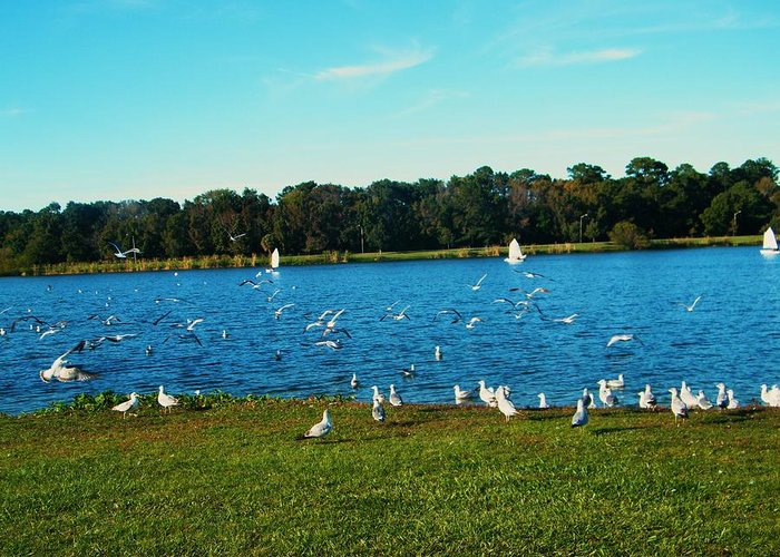 I Am Glad To Be Here In Nature. Greeting Card featuring the photograph Lake Myers. by Nereida Slesarchik Cedeno Wilcoxon