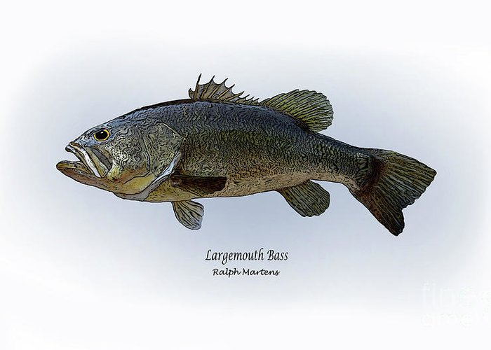 Largemouth Bass Greeting Card featuring the painting Largemouth Bass by Ralph Martens