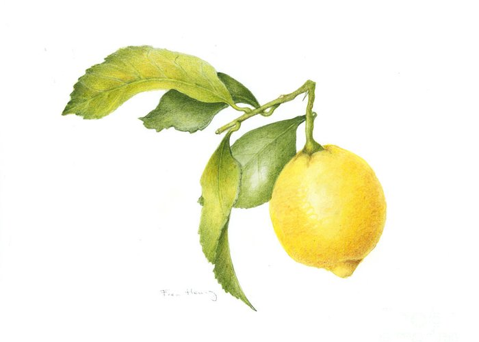Lemon Greeting Card featuring the painting Lemon by Fran Henig