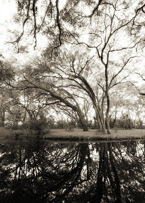 Live Oak Greeting Card featuring the photograph Live Oak Reflections by Dustin K Ryan