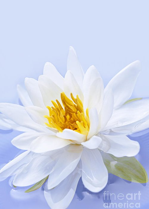 Lotus Greeting Card featuring the photograph Lotus Flower by Elena Elisseeva