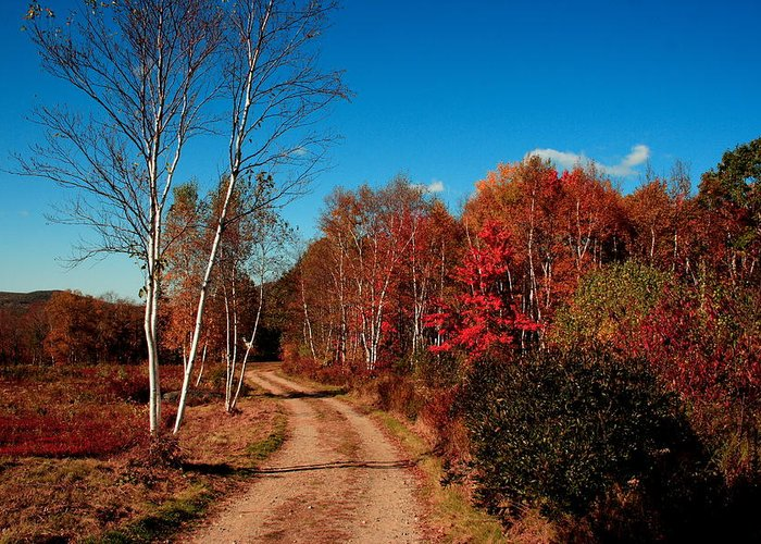 Fall Greeting Card featuring the photograph Maine Fall by Doug Mills