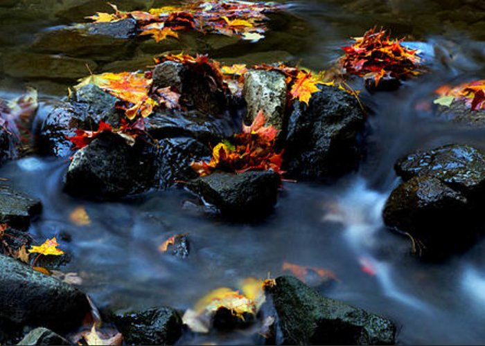 Landscape Greeting Card featuring the photograph Maple Leaves-0002 by Sean Shaw