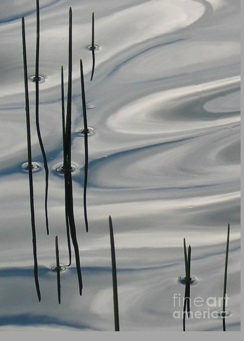 Swirling Greeting Card featuring the photograph Mesmerized by Idaho Scenic Images Linda Lantzy