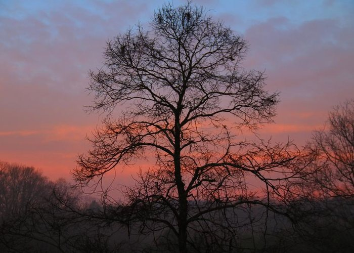 Dawn Greeting Card featuring the photograph Misty Dawn by Kathryn Meyer