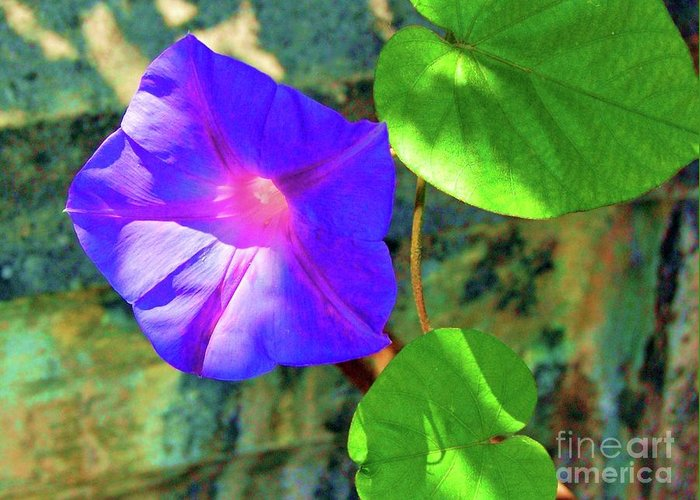 Morning Glory Greeting Card featuring the photograph Morning Glory by Debbi Granruth