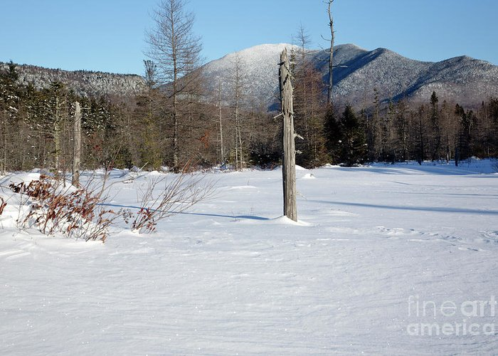 White Mountain National Forest Greeting Card featuring the photograph Mount Carrigain - White Mountains New Hampshire Usa by Erin Paul Donovan