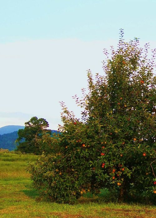 Western North Carolina Greeting Card featuring the photograph Nc Mountain Apples by Cindy Gacha