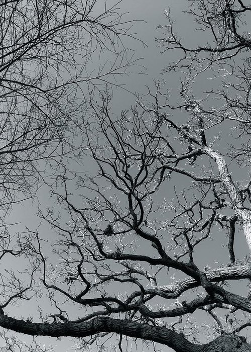 Trees Greeting Card featuring the photograph oak by Julian Grant
