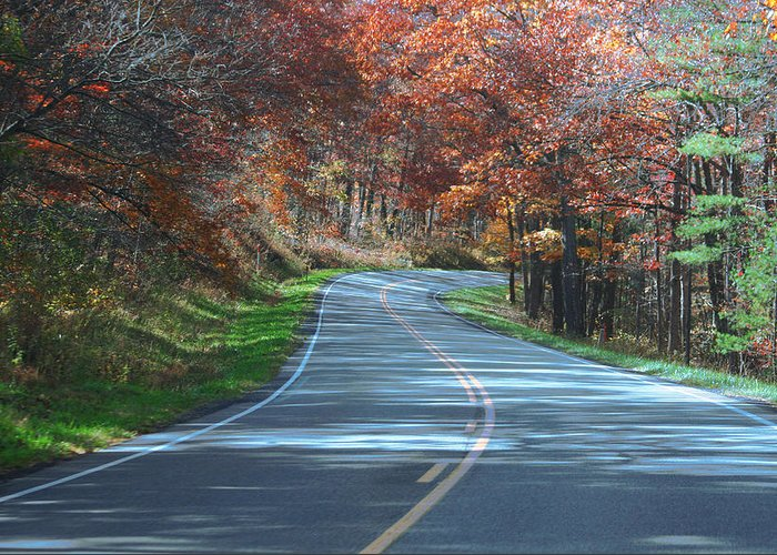 Forest Greeting Card featuring the photograph On The Road by Magda Levin-Gutierrez