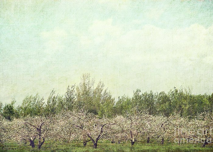 Apple Greeting Card featuring the photograph Orchard Of Apple Blossoming Tees by Sandra Cunningham