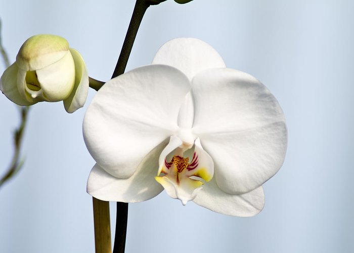 Floral Greeting Card featuring the photograph Orchid by John Ater