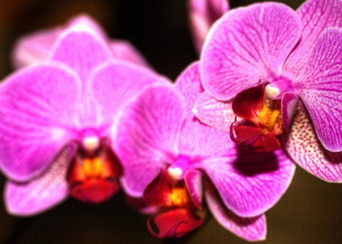 Orchids Greeting Card featuring the photograph Orchids by Laurie Prentice