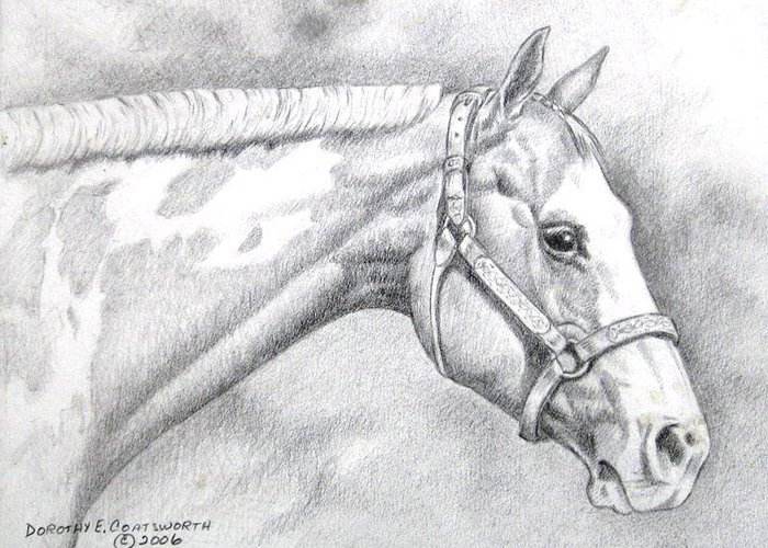 Greeting Card featuring the drawing Paint Horse by Dorothy Coatsworth