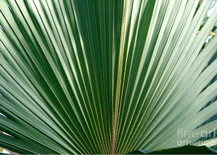 Botanical Greeting Card featuring the photograph Palm by Heather Boguski