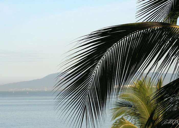 Puerto Vallarta Greeting Card featuring the photograph Palm by Jason Blalock