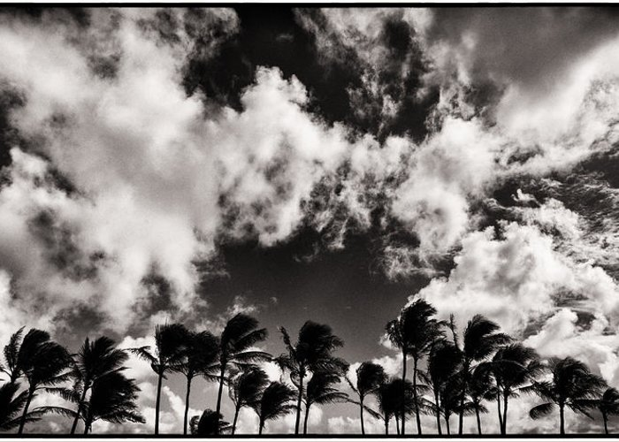 Greeting Card featuring the photograph Palms Blowing In The Wind by Lawrence Knutsson