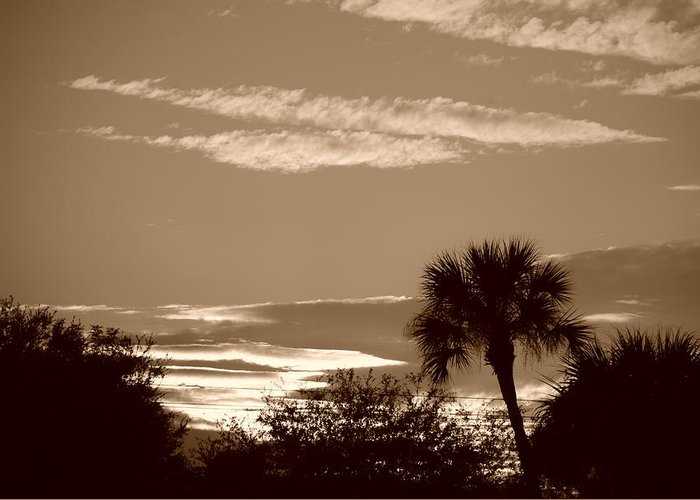 Sepia Greeting Card featuring the photograph Palms In The Clouds by Rob Hans