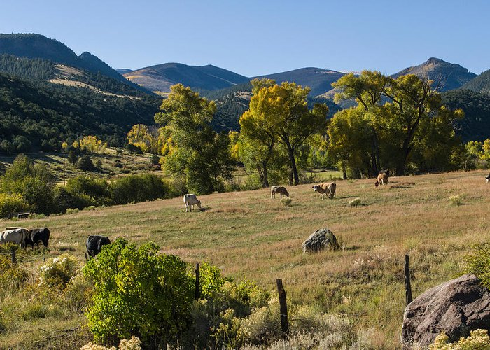 Colorado Photographs Greeting Card featuring the photograph Pastural Setting by Gary Benson