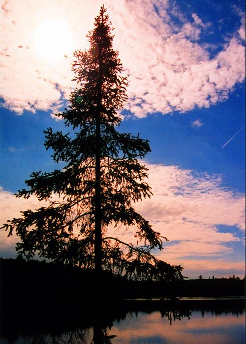 Landscape Greeting Card featuring the photograph Pine Tree By Peck Lake 4 by Lyle Crump