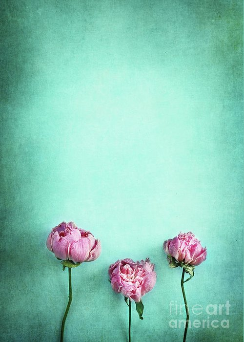 Peony Greeting Card featuring the photograph Pink Peonies by Stephanie Frey