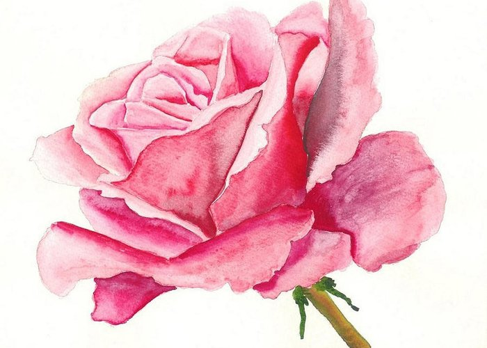 Pink Rose Greeting Card featuring the painting Pink Rose by Robert Thomaston