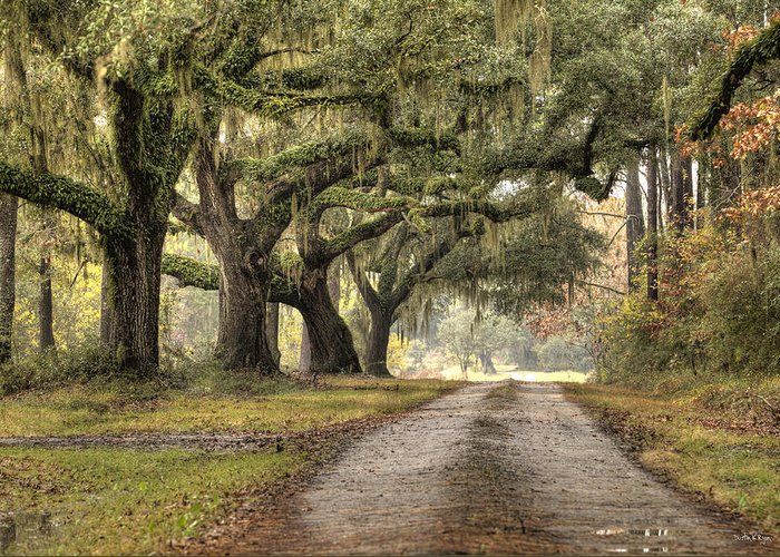 Live Oak Greeting Card featuring the photograph Plantation Drive Live Oaks by Dustin K Ryan