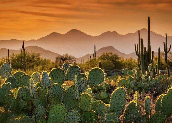 Sunset Greeting Card featuring the photograph Pure Sonoran Gold by Saija Lehtonen