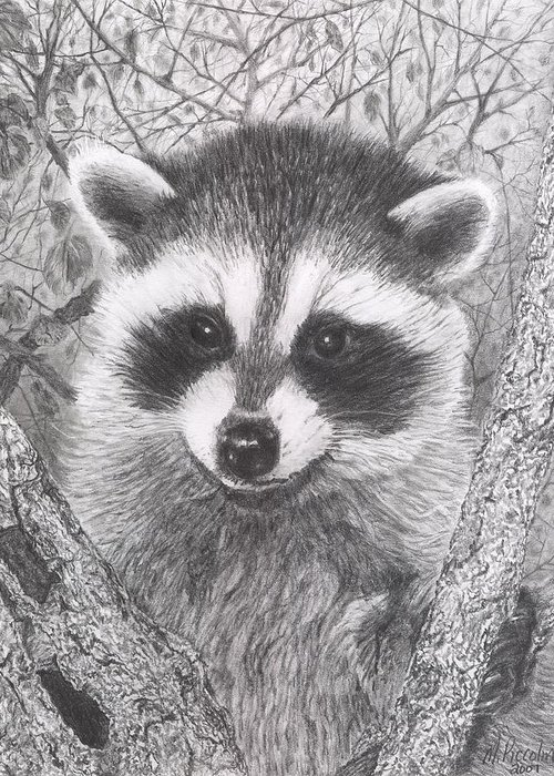Raccoon Greeting Card featuring the drawing Raccoon Kit by Marlene Piccolin