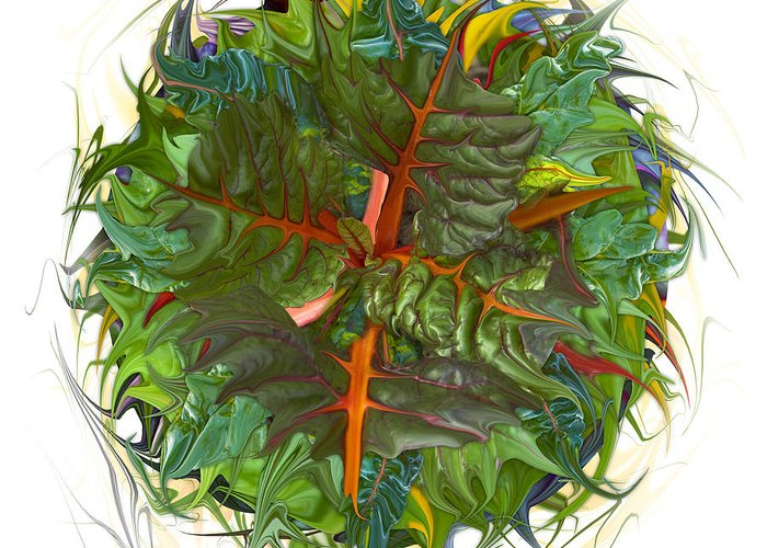Rainbow Chard Photograph By Bruce Frank