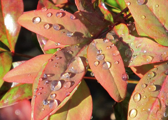 Raindrops Greeting Card featuring the photograph Raindrops by Michele Caporaso