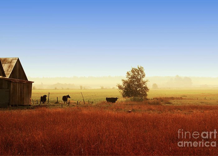 Landscape Greeting Card featuring the photograph Rawdon Everyday Life by Aimelle