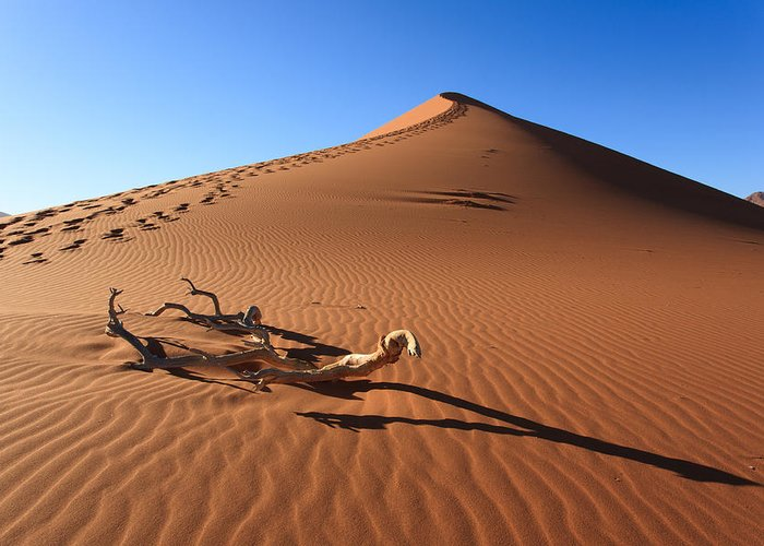 Kalahari Greeting Card featuring the photograph Red Dune by Davide Guidolin