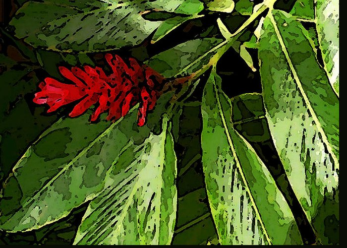 James Temple Greeting Card featuring the photograph Red Ginger by James Temple