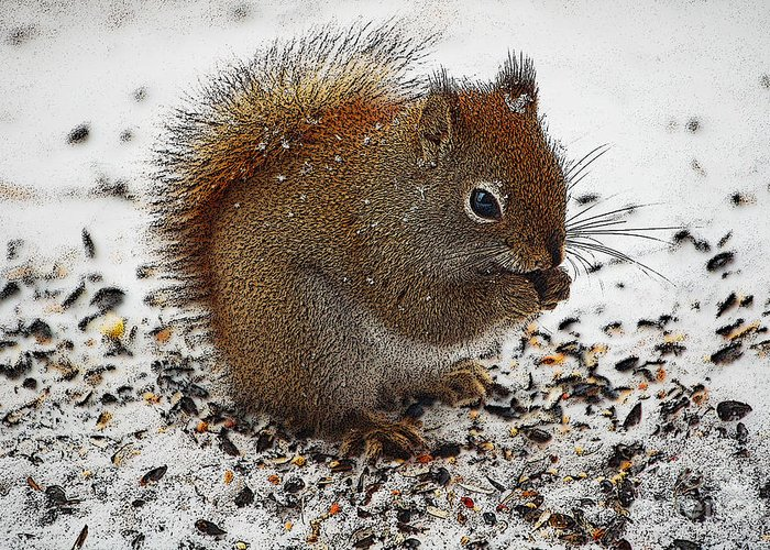 Berry Greeting Card featuring the photograph Red Squirrel by Diane E Berry