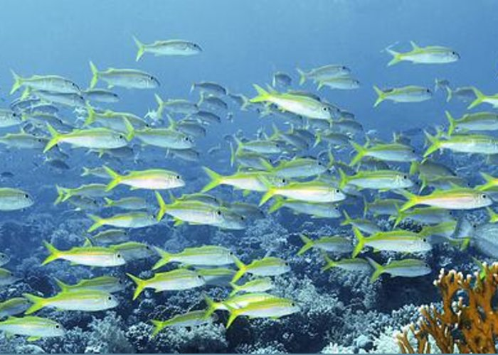 Animal Greeting Card featuring the photograph Reef Scene by Alexander Semenov