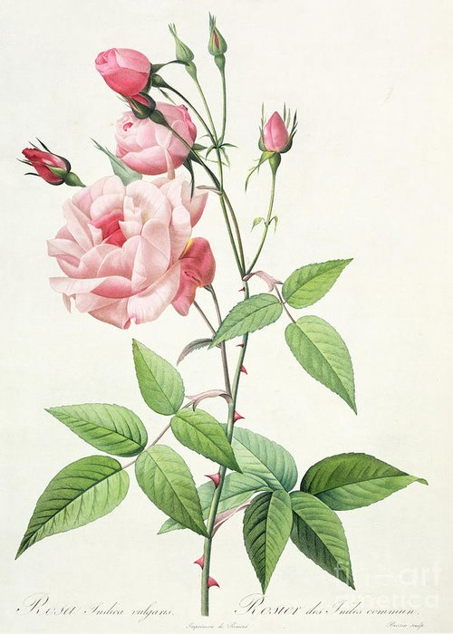 Lithograph Drawings Greeting Cards