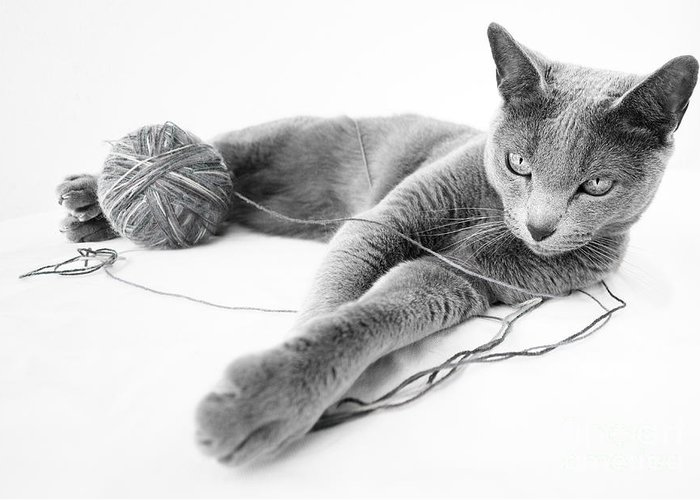 Russian Greeting Card featuring the photograph Russian Blue by Nailia Schwarz