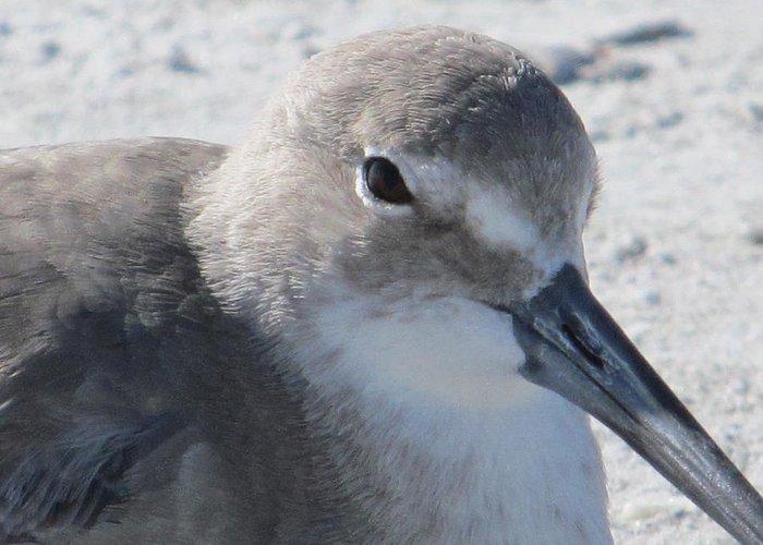 Sea Birds Greeting Card featuring the painting Sea Birds Sanibel Island by Deborah Martin