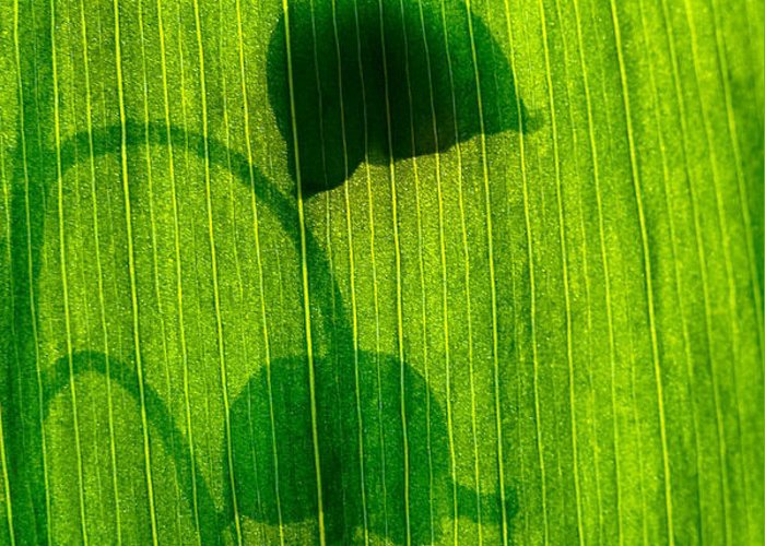 Nature Greeting Card featuring the photograph Shadow by Odon Czintos