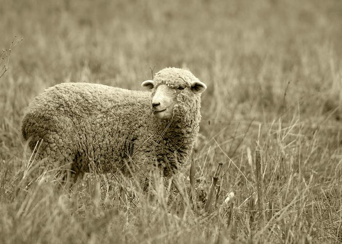 Sheep Greeting Card featuring the photograph Sheep In A Meadow by Robert Hamm