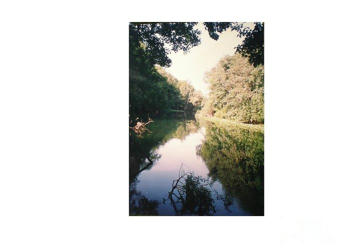 Reflection Of A Beautiful River Greeting Card featuring the photograph Silver River by Hal Newhouser