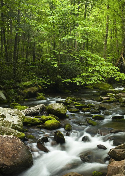 River Greeting Card featuring the photograph Smoky Mountain Stream by Andrew Soundarajan