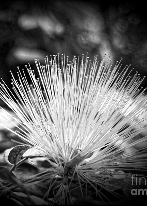 Flower Greeting Card featuring the photograph Spiked by Onedayoneimage Photography