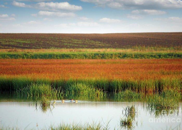 Bird Greeting Card featuring the photograph Swamp With Birds Landscape Autumn Season by Goce Risteski