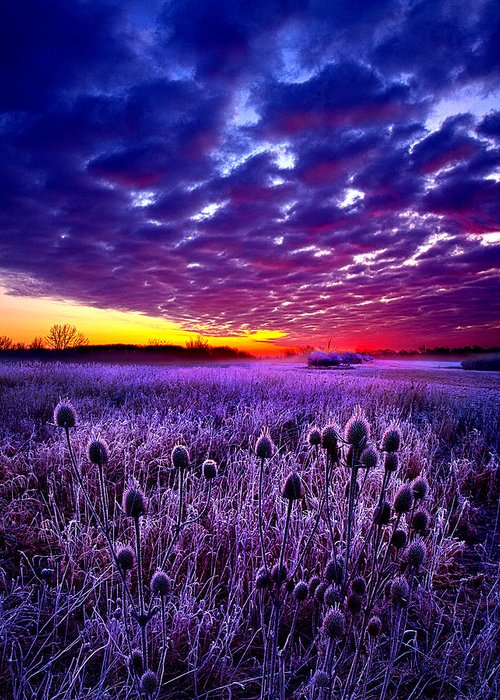 Horizons Greeting Card featuring the photograph The Audience by Phil Koch