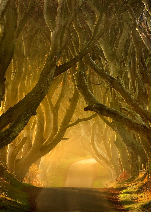 Antrim Greeting Card featuring the photograph The Dark Hedges IIi by Pawel Klarecki